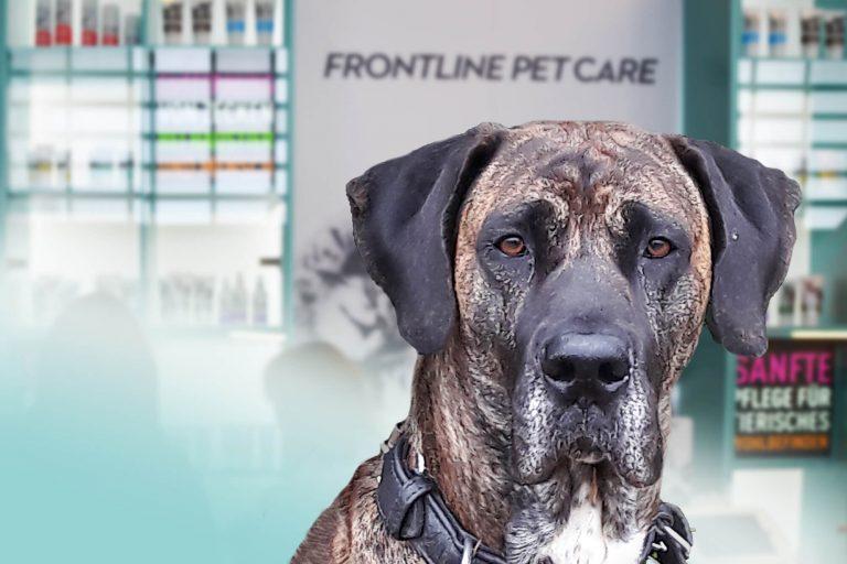 Frontline Pet Care Influencer Marketing am POI