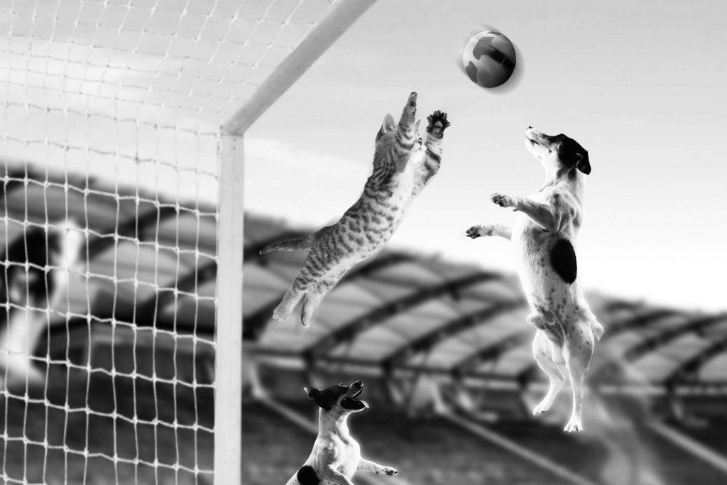 Hund und Katze beim Fußballspielen