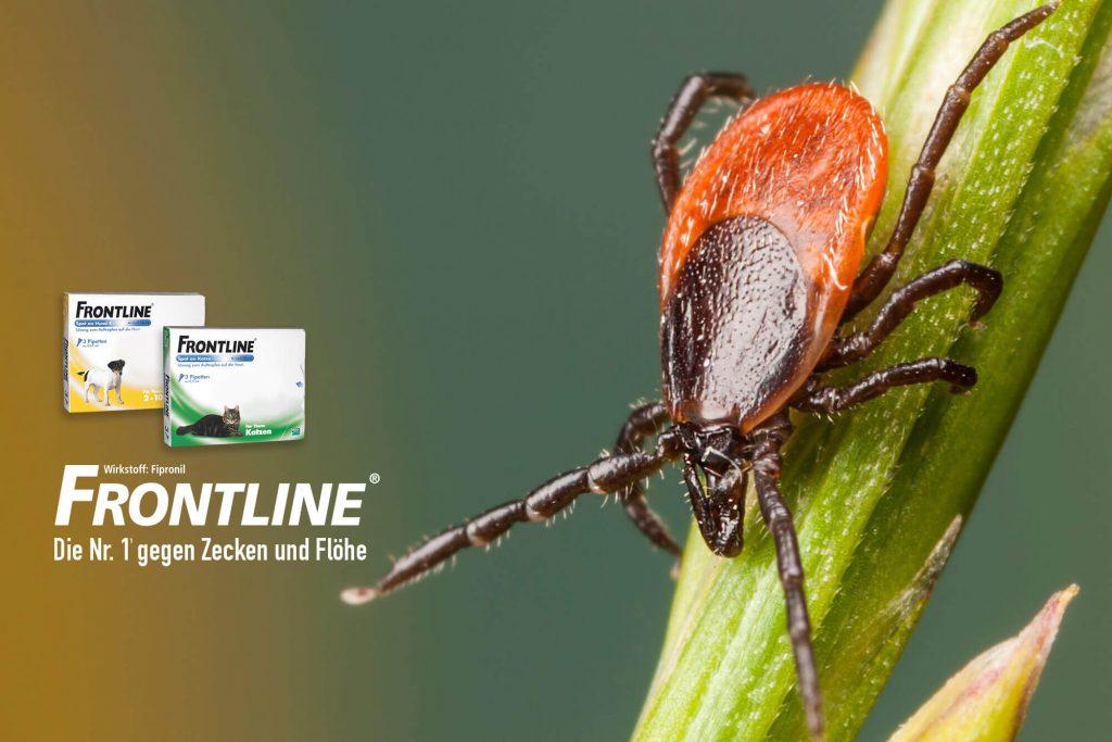 Frontline Produkte und Zecke auf Gras