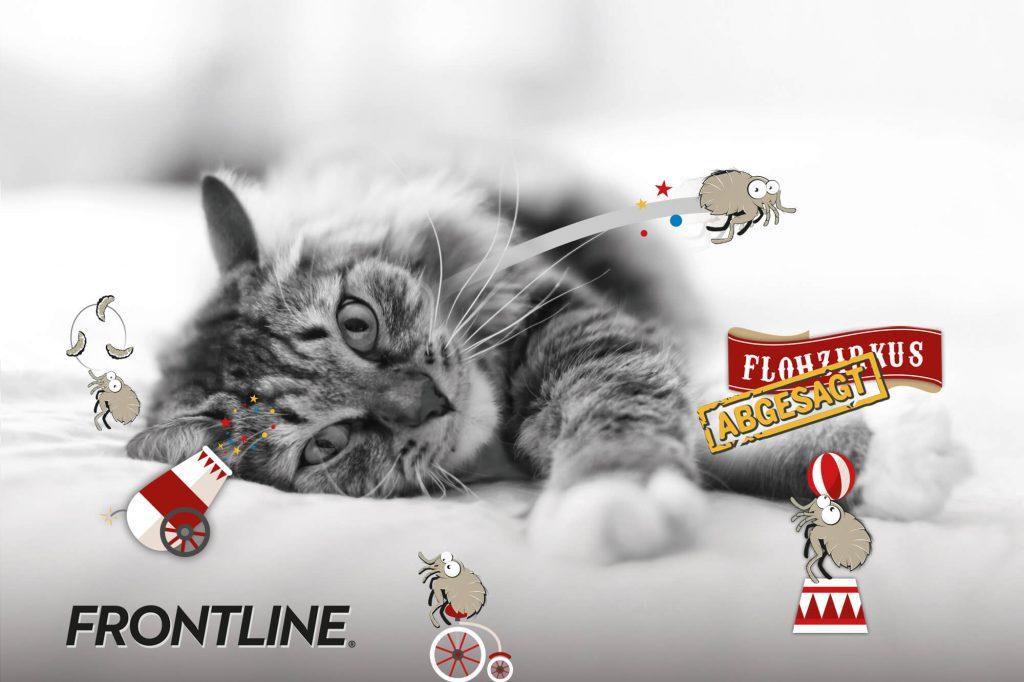 FRONTLINE Katze Flohzirkus abgesagt Kampagne