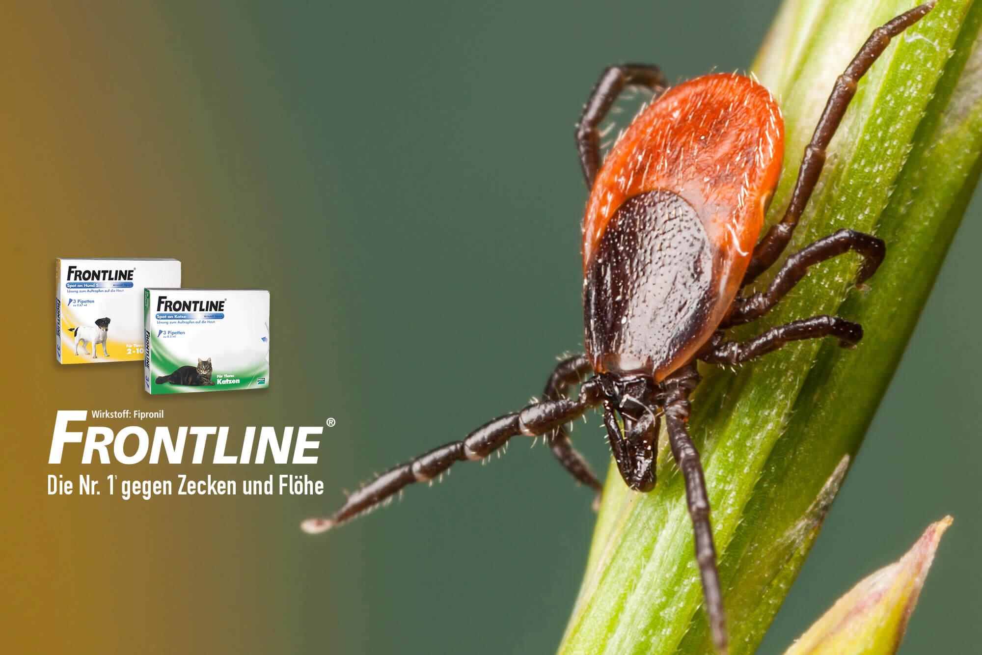 Frontline Kampagne 2015